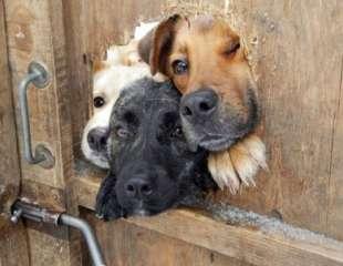 Представлена умная дверь за $3000 для домашних животных
